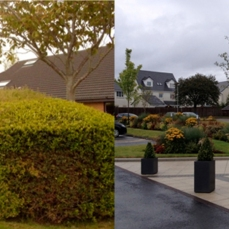 Before: Accord Hospice – Uninspiring planting hides the Hospice. After: High quality hard landscape to the Main Entrance framed by 12month range of mixed ground cover and herbaceous beds set in new turf. All to allow views of the Hospice on approach and colourful views for the residents and staff from the rooms