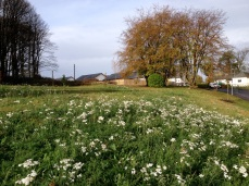 Significant feature trees, conifers and specimen shrubs were planted in Spring 2014 with extensive swathes of wild meadow seeding and higher maintained grass margins to create a new parkland extending the Park landscape.