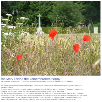 For the Centenary of the Hospital in 2016 work is underway to seed the field to the north of the Garden Centre with extensive coverage of poppies set within a linked series of grass paths