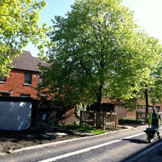 Tree Protection During Construction Work